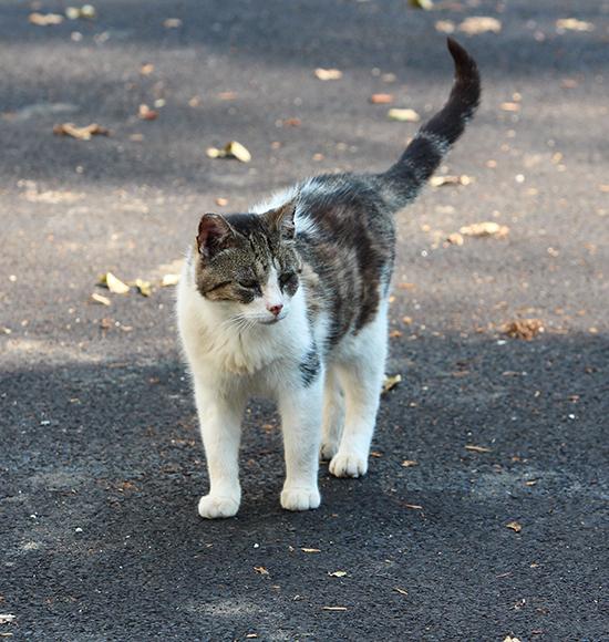 cat 2 blog