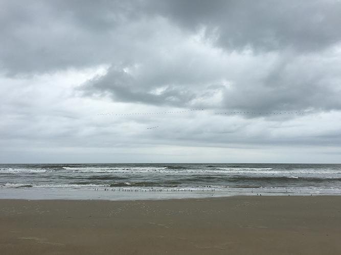 beacha